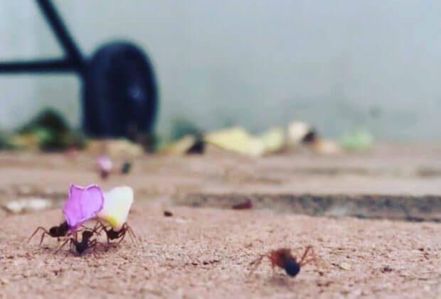 Hyperlapse Ameisenparade