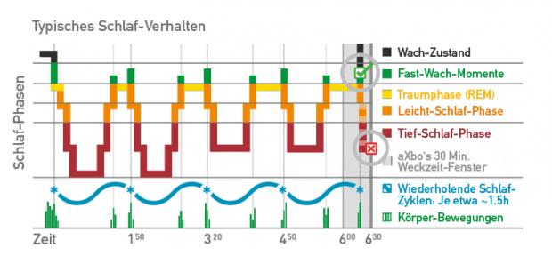 Übersicht der Schlafphasen - Grafik: Axbo