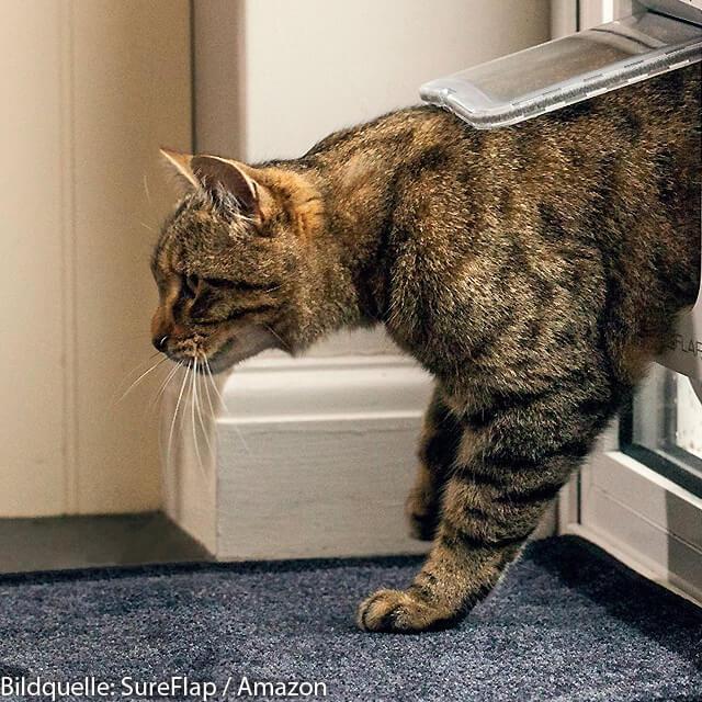 Katzenklappen mit RFID-Chip kaufen, Katze Mikrochip Klappe für Tür, Fenster, Wand