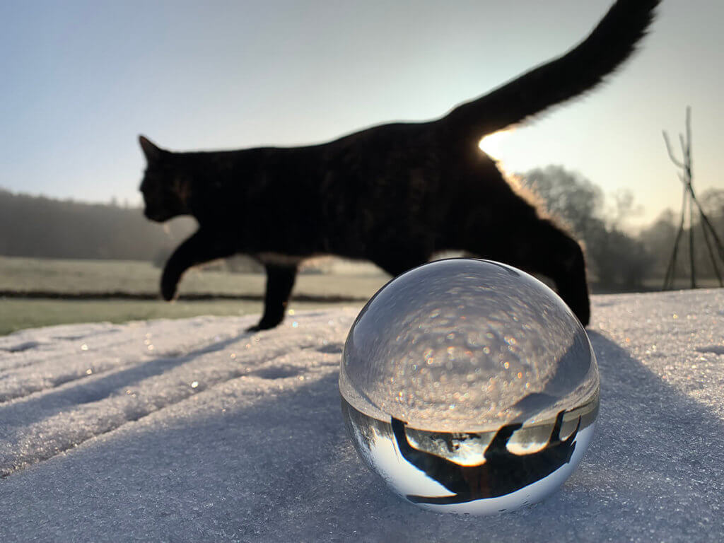 Auch eine schöne Komposition – Schnee, Katze, Glaskugel und ein iPhone XS zum Fotografieren.