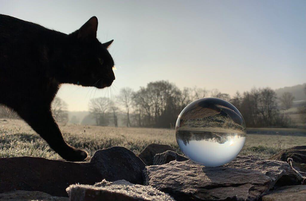 Schwer zu planen: Katzen machen ja leider immer nur was sie wollen, aber manchmal aus Versehen das Richtige!