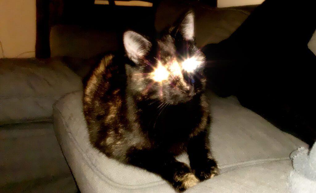 Kirakira-App und Katze – klappt super! Für dieses Foto wurde keine Katze geqiuält oder verletzt und auch nicht mit Futter bestochen. Das bestätigt unser heimischer Kleintierbeauftragter!