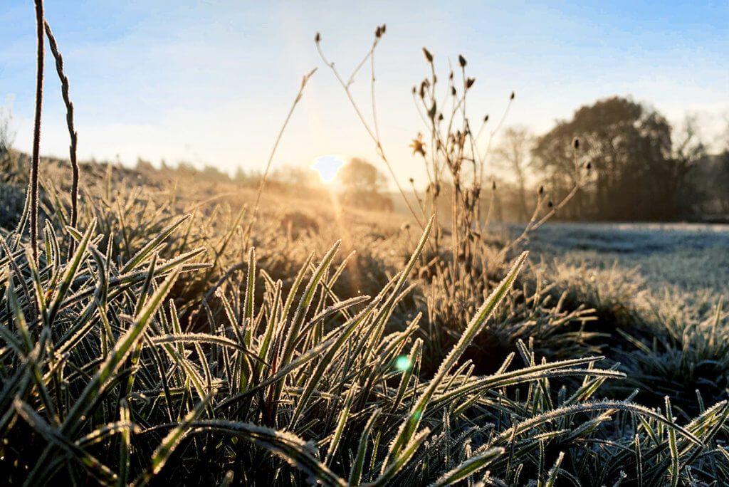 Fotografieren gegen die Sonne ist seit dem iPhone XS eines meiner Lieblingsmotive. Hier ist es das Gras mit Raureif, welches das Foto interessant macht (Foto: Sir Apfelot).
