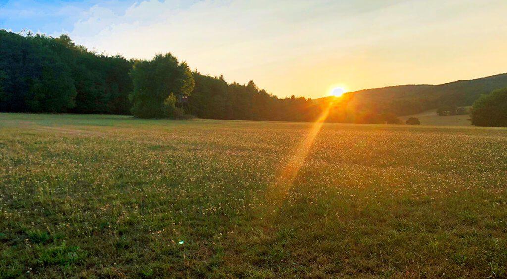 Bei diesem Sonnenuntergang hat Smart-HDR ebenfalls gute Arbeit geleistet. Oben links konnte ich sogar noch ein bisschen Himmelblau restaurieren, das tatsächlich da war. Die Wolken sehen zwar reingeshoppt aus, sind aber die Original-Wolken. Die Wiese und die Bäume sind ebenfalls mit der Farbsättigung etwas verstärkt worden (Foto: Sir Apfelot).