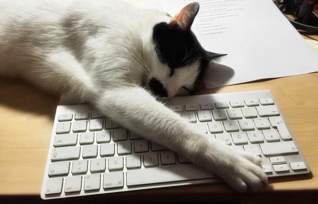 Mein Kater liegt liebend gern auf meinem MacBook Pro rum und blockiert nebenbei noch die Tastatur mit der Pfote… schließlich soll ich ihn ja kraulen und nicht arbeiten (Foto: Sir Apfelot).
