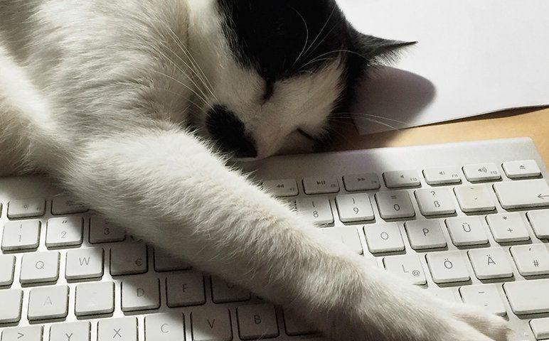 Katze bremst Foto-Synchronisation aus