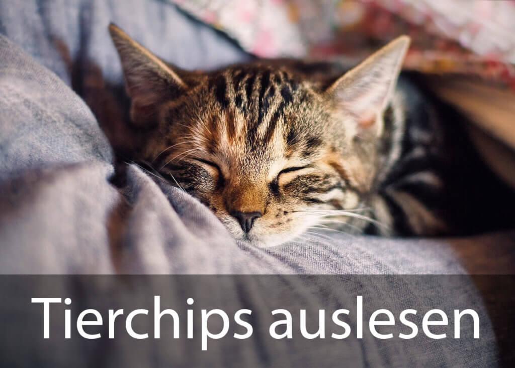 Egal ob Hund, Katze oder Pferd – die meisten Haustiere sind mit Mikrochips gekennzeichnet, die sich mit speziellen Lesegeräten auslesen lassen (Foto: KatinkavomWolfenmond/Pixabay).