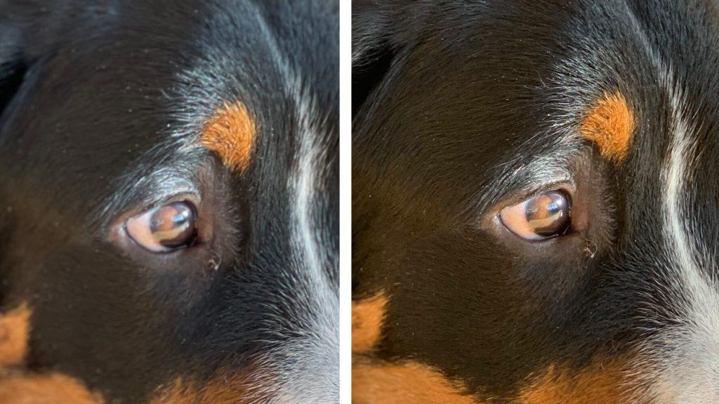 Wenn man sich die Details anschaut, sieht man zudem,. dass der Portraitmodus beim 12 Pro mit der Schärfe Probleme hatte. Das Fotos, das mit dem iPhone Xs aufgenommen wurde (rechts), zeigt deutlich mehr Struktur im Fell.