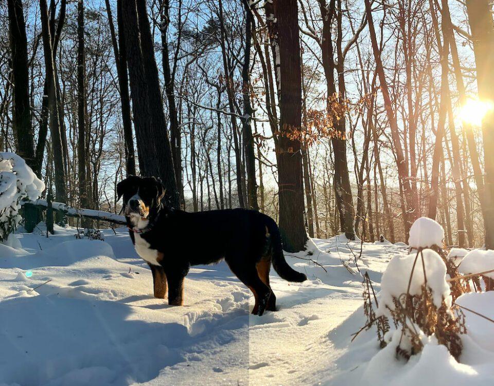 Weißabgleich: Blauen Schnee in Fotos-App korrigieren