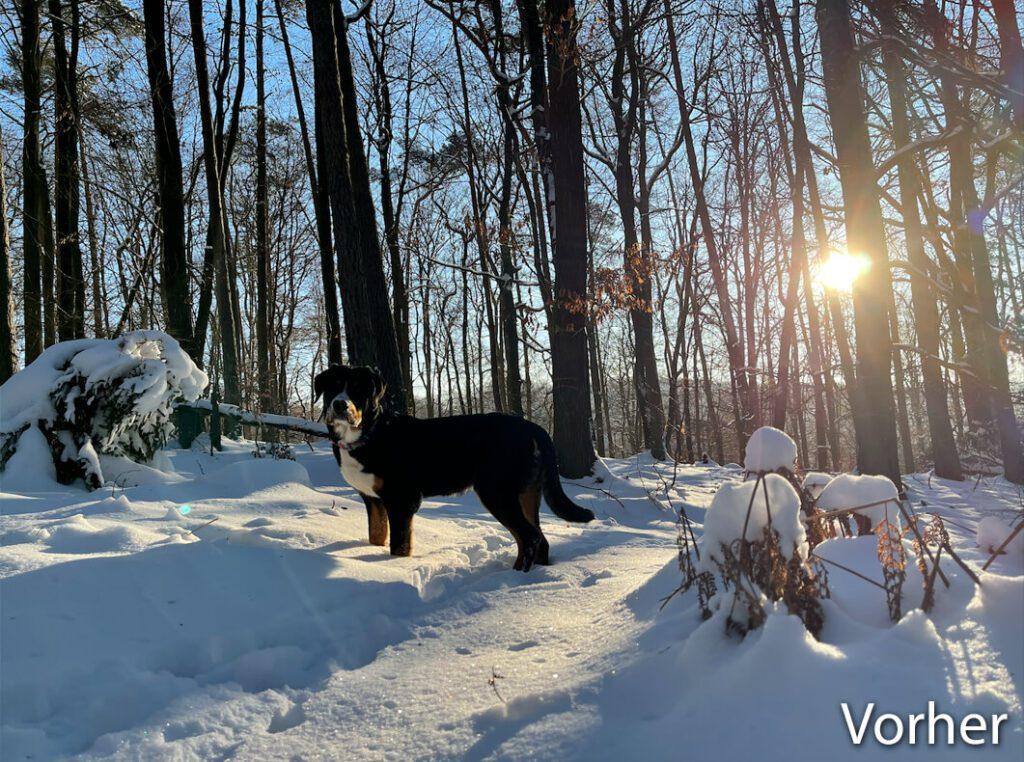 """Unser """"Henry"""" im Schnee – hier noch etwas zu blau und zu dunkel. Aber trotzdem ein lieber Wuffi. ;-)"""