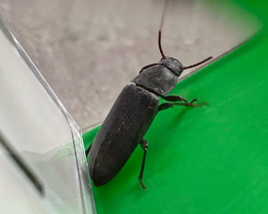 Hat man ein Insekt mit dem Snapy gefangen, kann man es auch schön seinen Kids zeigen oder es selbst näher unter die Lupe nehmen – ein schöner Nebeneffekt des Insektenfängers.